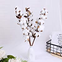 Baby Plum Dried Cotton Flower Arrangement 21inches Real Cotton Stems Natural Dry Cotton Tree Stem Decorations 3 Packs…