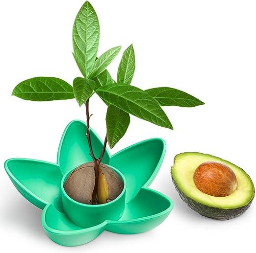 HENMI Kit de Crecimiento del árbol de Semillas de Aguacate Kit de ...