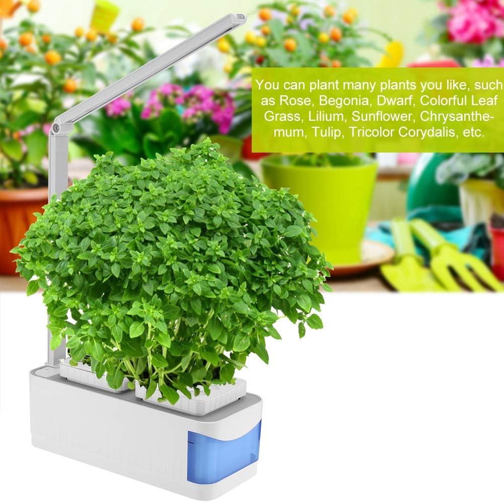 15 x Bégonia Illumination double blanc PLUG plantes nouvelle saison envoi gratuit