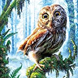 Chinatera 5d DIY Diamond Owl Resin Counted Paint By Number Kits Wall Sticker 35*35cm