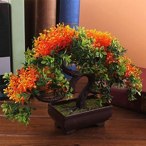 STARE89 Árbol de Bonsai Chino de Pino para Invitados, decoración ...