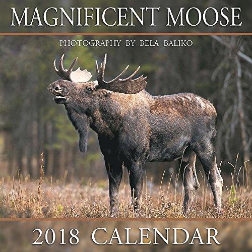 Moose Calendar - 2