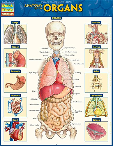 Anatomy of the Organs (Quick Study Academic)