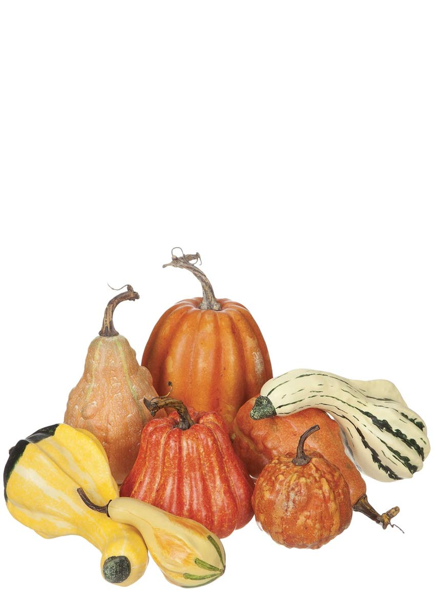 Sullivans Harvest Pumpkins - Set of 8