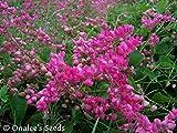 Coral Vine: PINK (Antigonon leptopus) Rosa De Montana,Queen's Wreath, Mexican Creeper (18+ Seeds)