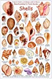 Shell ID Card: Beachcomber's Field Guide Tropical Atlantic Caribbean Gulf of Mexico