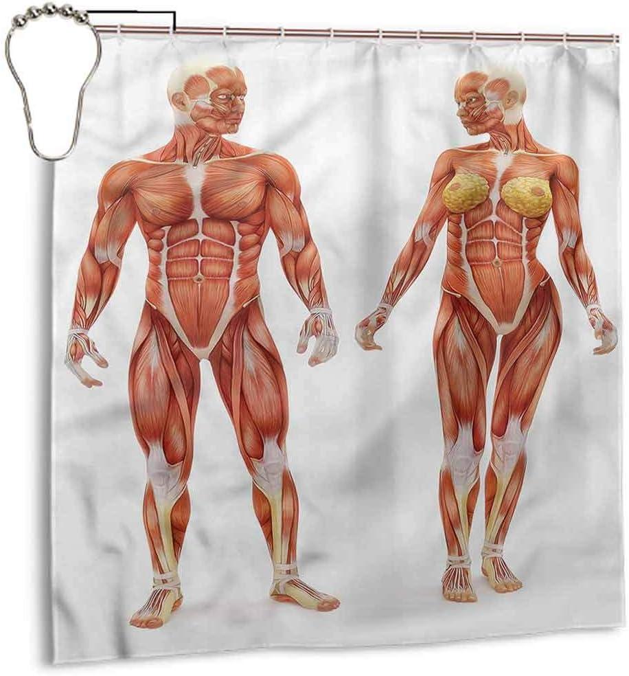 DILITECK Cortina de baño Impermeable anatomía Humana ...