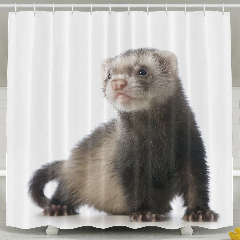 Every Day Is Special Cute Ferret Shower Curtain Waterproof Polyester Fabric Decorative Bathroom Bath Curtains 6072inch
