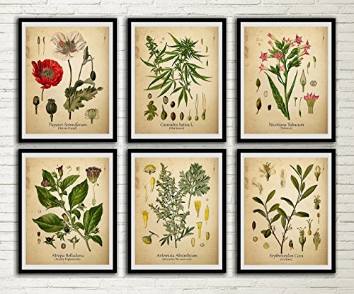 Drug Plants Vintage Print Set Cocaine Marijuana Deadly Nightshade Opium Poppy Absinthe Tobacco Wall Art Antique Botanical Art Medicinal Plants Decor