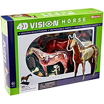 Tedco 4D Vision Horse Model