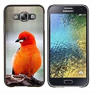 Las plumas de pájaro rojo anaranjado Furry Pico- Metal de aluminio y de plástico duro Caja del teléfono - Negro - Samsung Galaxy E5 / SM-E500