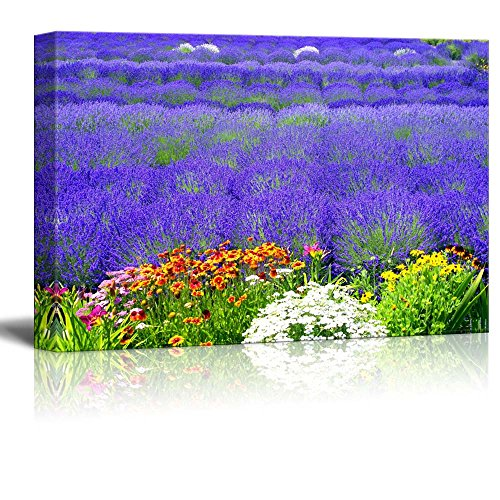 Colored Multi Beautiful (Canvas Prints Wall Art - Beautiful Scenery of Lavender Field with Multicolored Flowers | Modern Wall Decor/Home Decor Stretched Gallery Canvas Wraps Giclee Print & Ready to Hang - 16