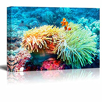 Underwater Landscape with Clown Fish Near Tropical Coral Reef Bali Indonesia, Created Just For You, Beautiful Portrait