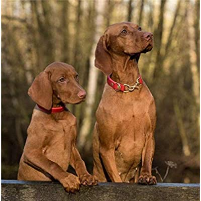 WYBFLF Puzzle Toy Vizsla Dogs Standing On Brown Wood Plank Puzzle 1000 Pieces Wooden Puzzle Cartoon Jigsaw Puzzles for Children Educatio l Toys Decorative Paintings: Toys & Games