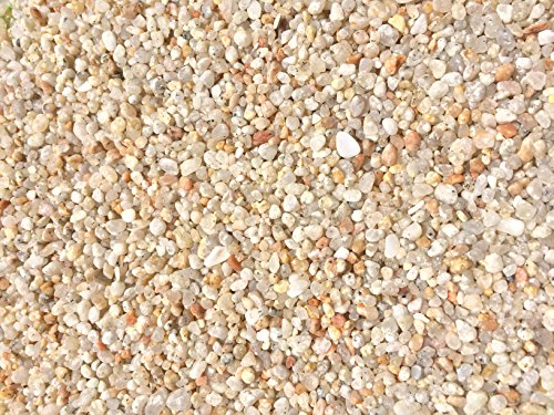 Garden Bloom Authentic Mexican Beach Pebbles 1/4 Inch - Perfect for Succulents, Aquariums, Terrariums, Fairy Gardens, All Landscape Applications (1 LB) (Decorative Cover Soil)