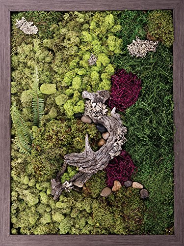 Carpentree 25''x33'' Nature's Glory-Biophilic Framed Art by Carpentree