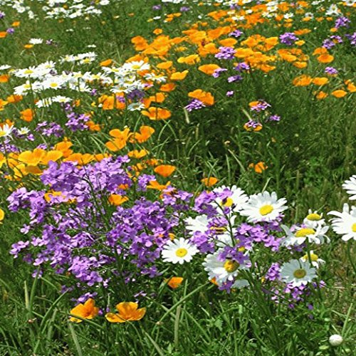 Southeast Wildflower Seed Mix - 5 Lb by The Vermont Wildflower Farm (Image #1)