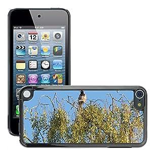 hello-mobile Etui Housse Coque de Protection Cover Rigide pour // M00137122 Cuervo Pájaro Birch Tree // Apple ipod Touch 5 5G 5th