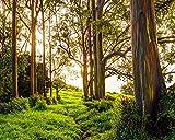 11x14 Rainbow Eucalyptus Trail Print, Rustic Nature Decor, Maui Hawaii