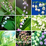 Best-Selling!6 Colors Mixed Bell Orchid Seeds Campanula Flowers Potted Flower Plants Convallaria Seed-100Seed/Lot,#R3YSKA