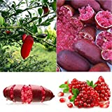 Bluelans Fruit Seeds Finger Limes Citrus Pomegranate Seeds For Home Garden Fruit Seeds