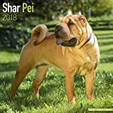 Shar Pei Calendar - Dog Breed Calendars - 2017 - 2018 wall Calendars - 16 Month by Avonside