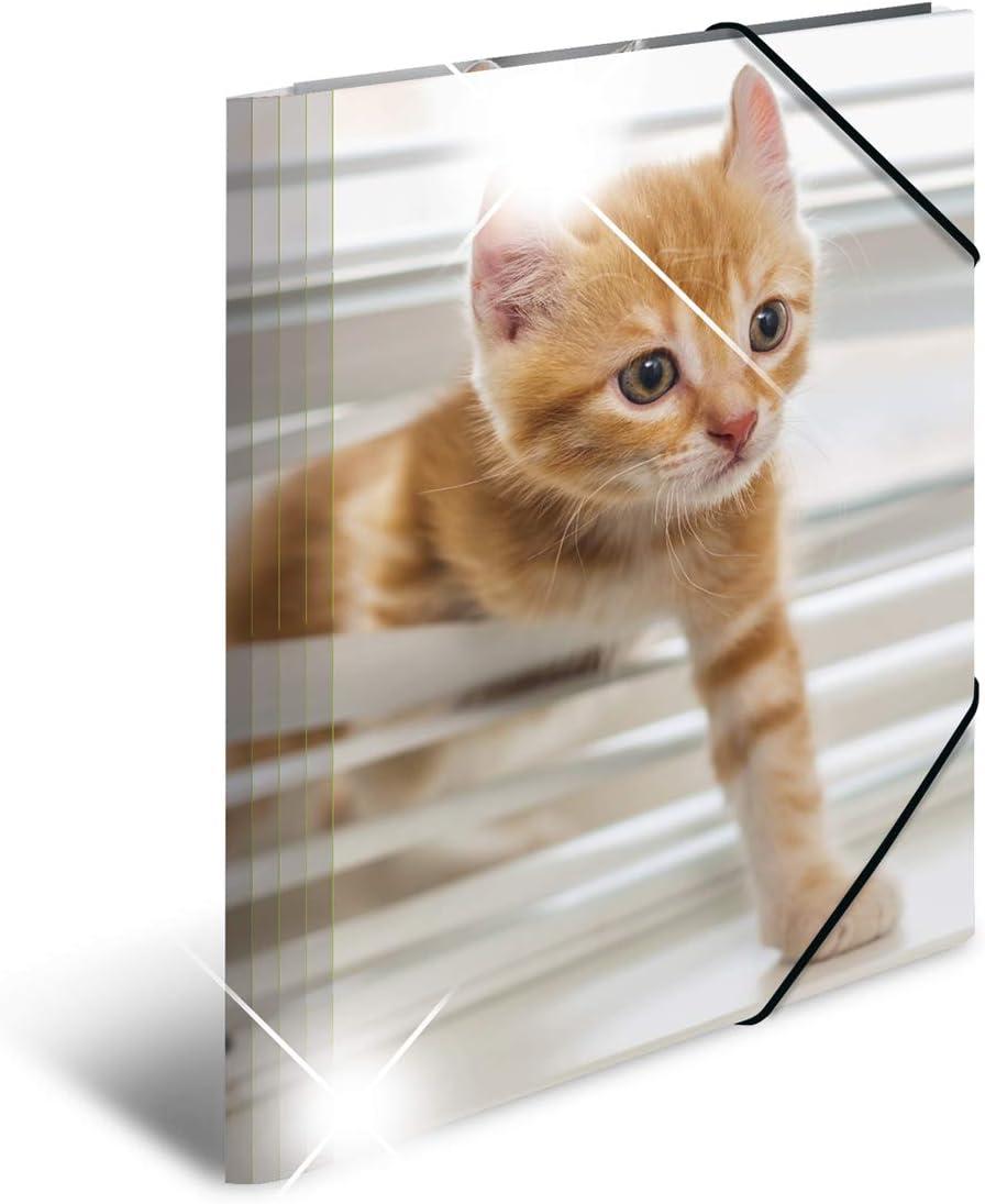 serie Animali segno Mappe Con con elastici in gomma HERMA 19328/patinati Sammelmappe DIN A4 con stampa interna 1/pezzi in plastica motivo: gatti