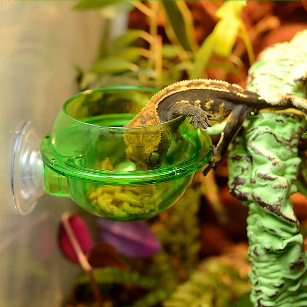 Ciotola per alimenti anti-fuga per rettili tartaruga lucertola e vermi
