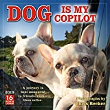 2019 Dog is My Copilot 16-Month Wall Calendar: by Sellers Publishing, 12 x 12; (CA-0439)