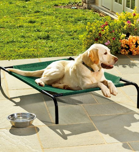 Weather Resistant Outdoor Large Raised Mesh Pet Bed with Powder-Coated Steel Frame 31 W x 51 L Green ()