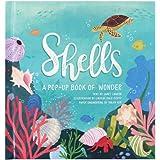 Shells: A Pop-Up Book of Wonder (4 Seasons of Pop-Up)