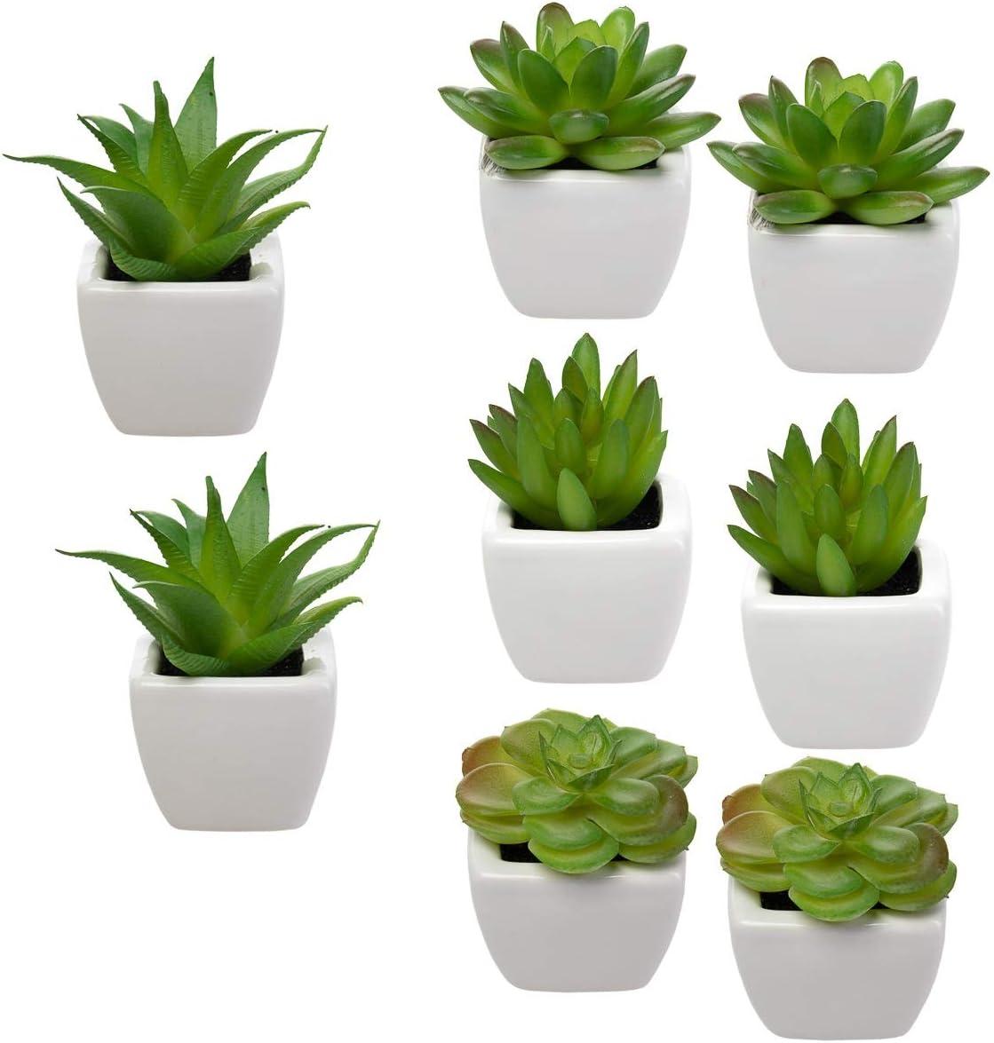Amazon Com Home Trends Set Of 8 Green Succulents Artificial Mini Succulent Plants Faux Succulents Potted In White Ceramic Pots Home Kitchen