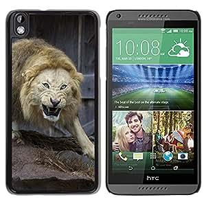 iBinBang / Funda Carcasa Cover Skin Case - Lucha León enojado Naturaleza Animal Rey - HTC DESIRE 816
