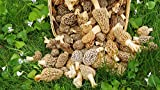 Morel Mushroom Spores in Sawdust Bag Mushrooms Spore Grow Kit Makes 100 Gallons