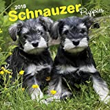 Schnauzer Puppies 2018 12 x 12 Inch Monthly Square Wall Calendar, Animals Dog Breeds Puppies (English, French and Spanish Edition)