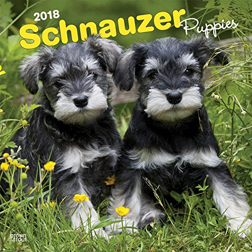 Schnauzer Puppies (Schnauzer Puppies 2018 12 x 12 Inch Monthly Square Wall Calendar, Animals Dog Breeds Puppies (English, French and Spanish Edition))
