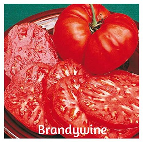 brandywine tomato - 6