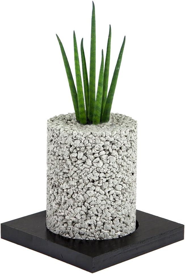 【eco-pochi】棒サンスベリア × エコポチ・シリンダーミニ(円柱型ミニサイズ) 白 竹炭やシラスを使った観葉植物用ポッド