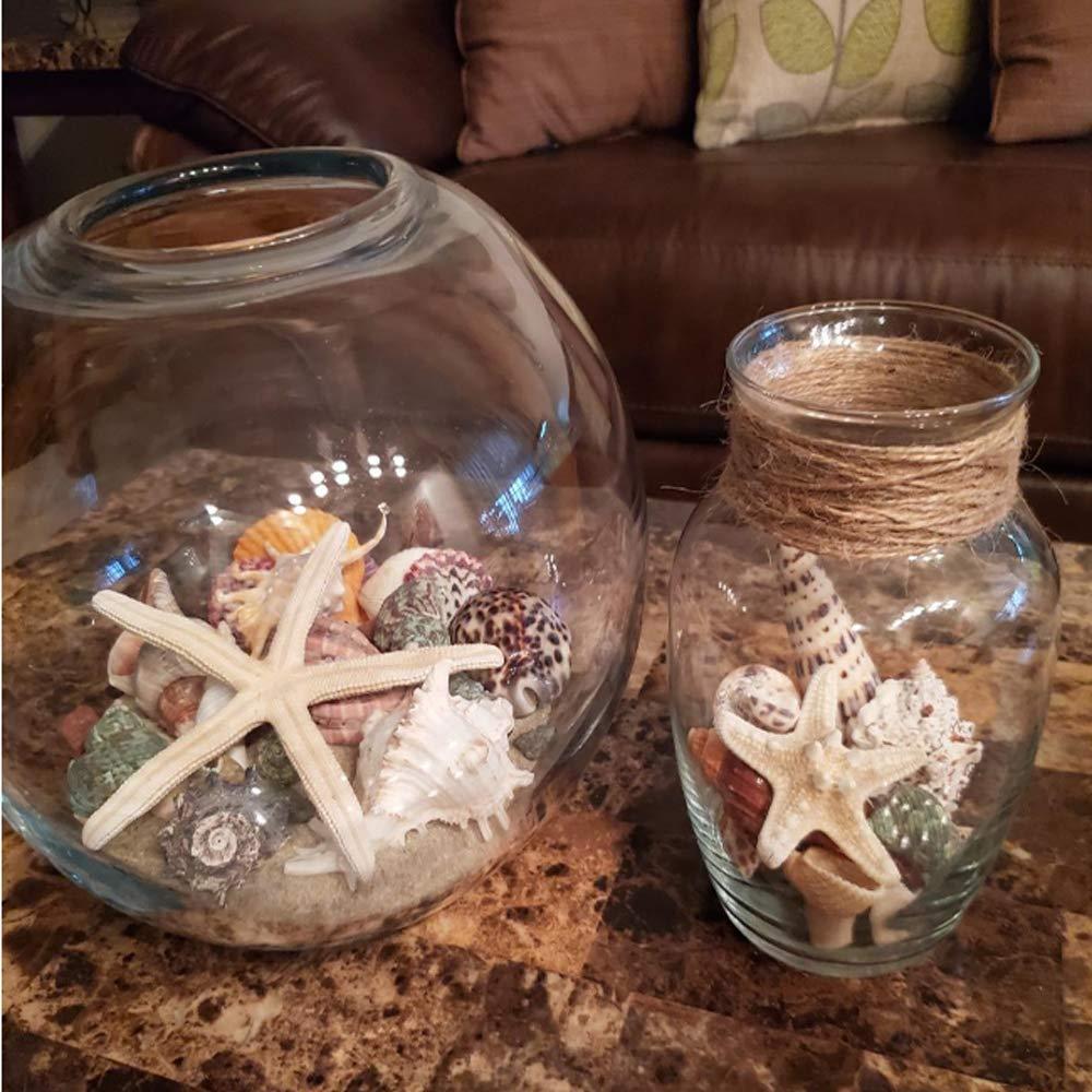 Jangostor 21 PCS Conchas de mar medianas Conchas de mar de playa mixtas varios tama/ños Conchas de mar de colores naturales Estrellas de mar Perfecto para la fiesta tem/ática de playa Decoraciones