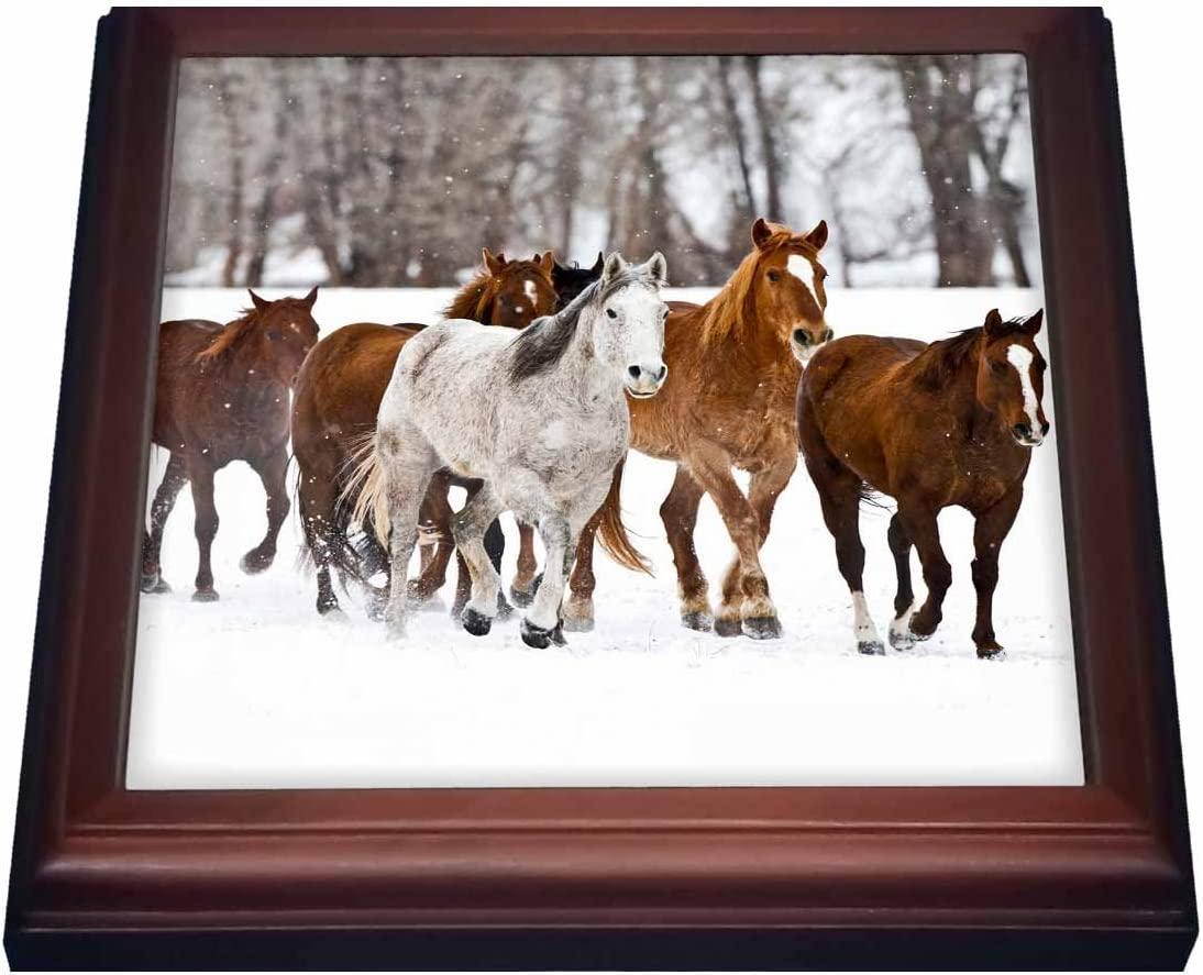 3dRose Running Horses on Hideout Ranch, Shell, Wyoming US51 JRE0031 Joe Restuccia Iii Trivet with Ceramic Tile, 8 by 8