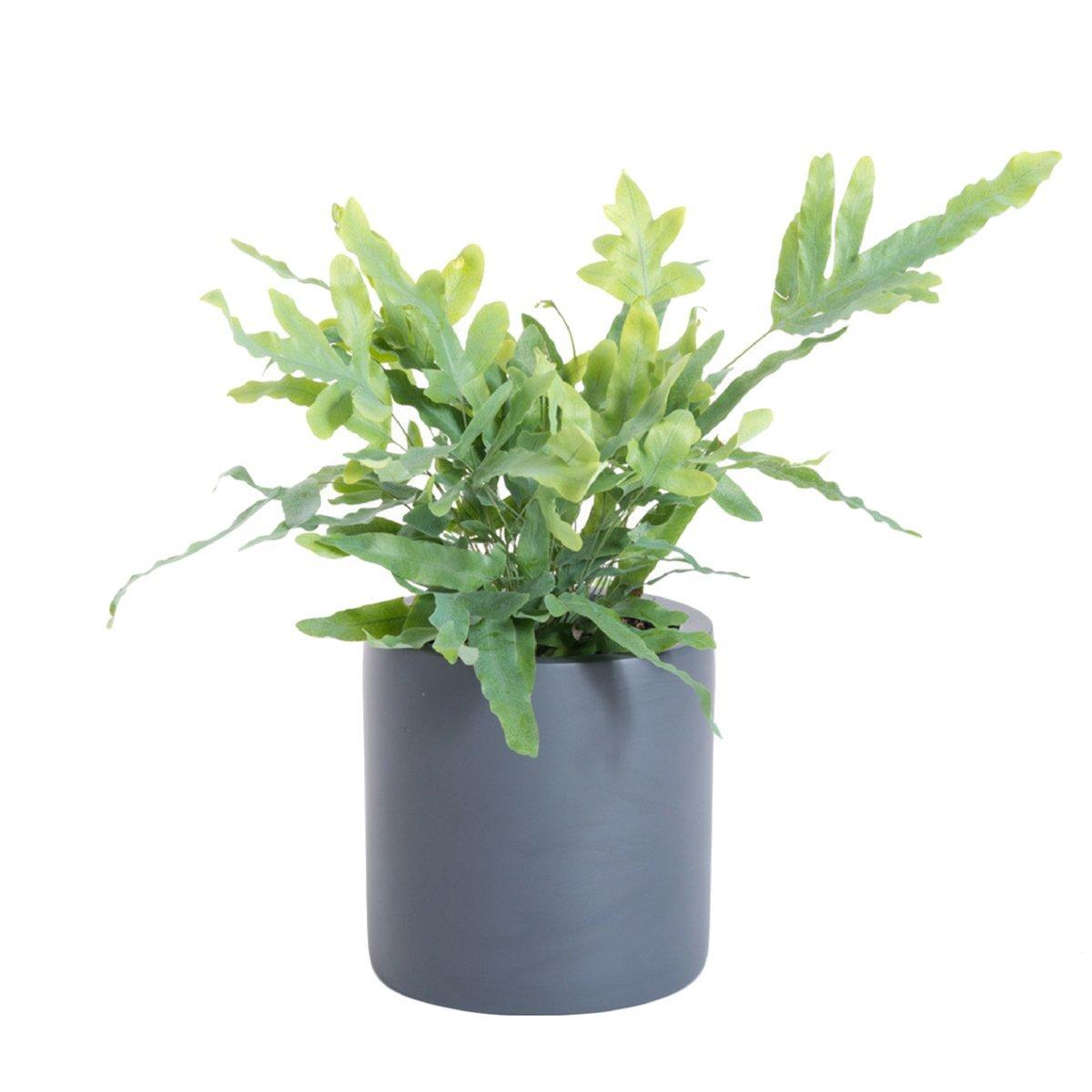 Amazon Com Purepots Round Cylinder Pot 2310 Large Planter Plant