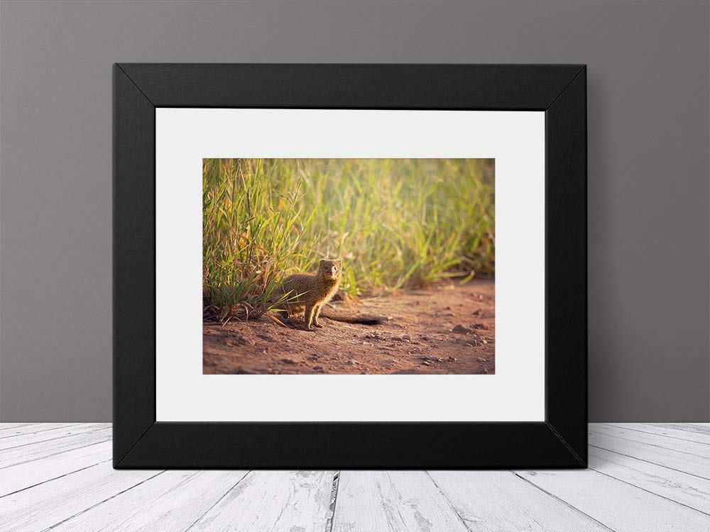 Mongoose - Wildlife Photograph Animal Picture Home Decor Wall Nature Print - Variety of Size Available by Whimsical Wild Artwork (Image #3)