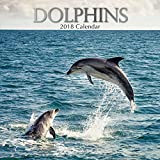 2018 Dolphins Calendar - 12 x 12 Wall Calendar - With 210 Calendar Stickers