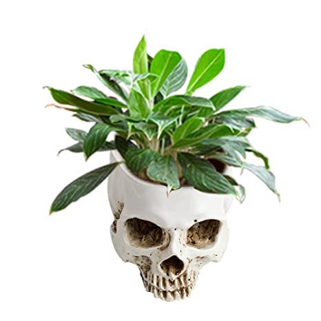 Amazon.com: zinnor Flower Pots Resin Human Skull Head Plant Flower ...