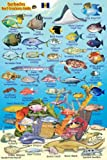 """By Franko Maps Ltd. Barbados Reef Creatures Guide Franko Maps Laminated Fish Card 4"""" x 6"""" [Map]"""