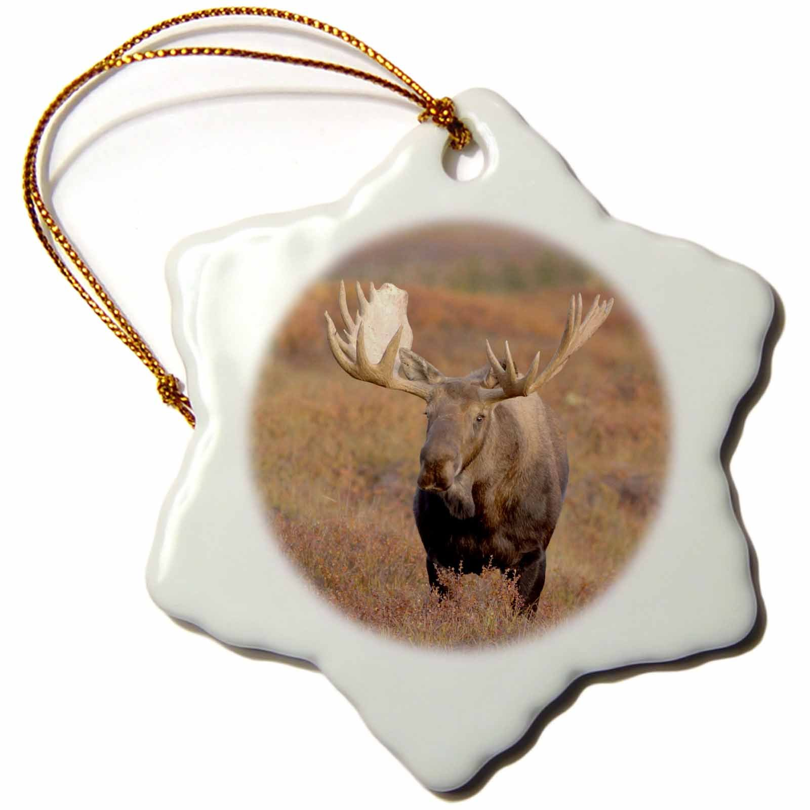 3dRose orn_87700_1 Moose bull wildlife, Denali National Park, Alaska - US02 SKA3060 - Steve Kazlowski - Snowflake Ornament, Porcelain, 3-Inch