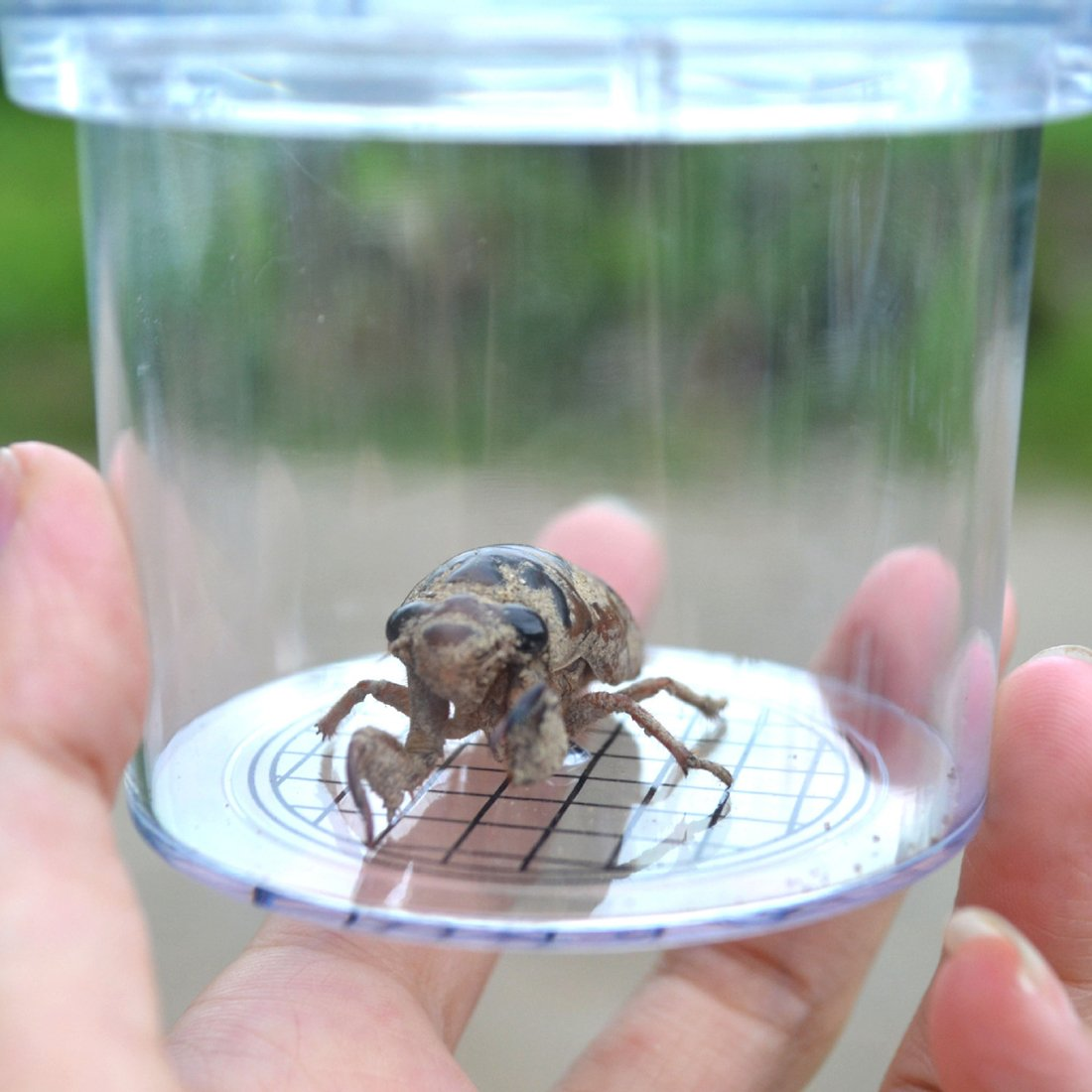 Science Nature Exploration Toys Insect Explore MingCheng Bug CritterCage Magnifying Bug Viewer 5 PCS