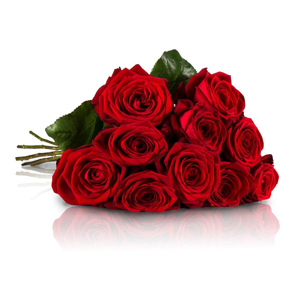 MIFLORA Blumenstrauß mit 10 Red Naomi Rosen mit XXL-Blütenköpfen