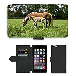Super Stella Cell Phone Card Slot PU Leather Wallet Case // M00147401 Haflinger Foal Mare Horses Pasture // Apple iPhone 6 PLUS 5.5""