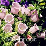 Seeds Shopp Pink Eustoma Grandiflorum Bonsai Seeds 100pcs Lisianthus Flower Seeds Perennial Ornamental Plant Sementes de flores